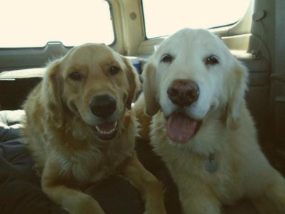 Tucker and Duke, dogs, in car