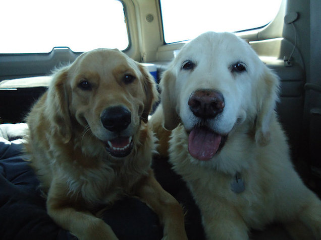 Tucker and Duke in car